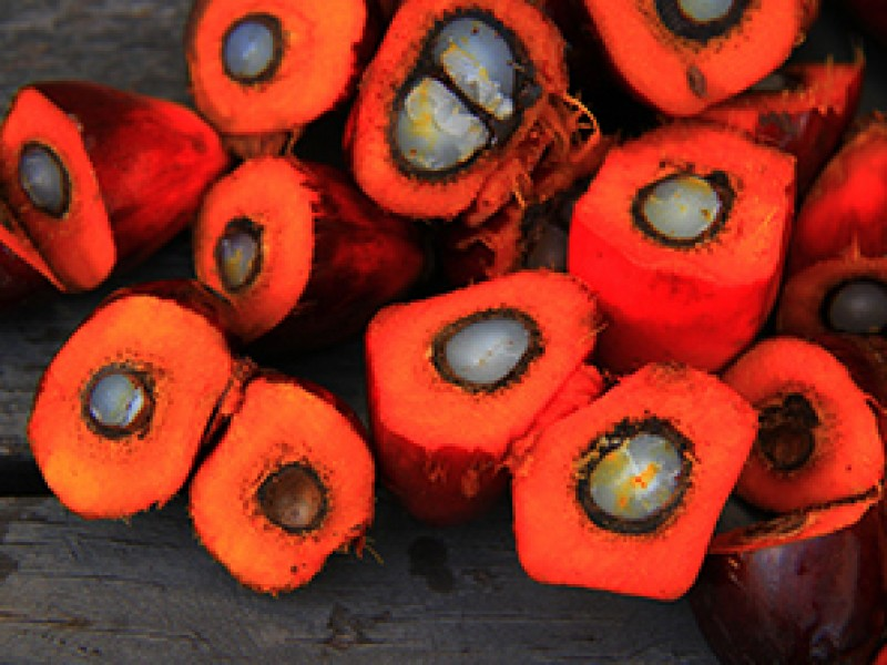 Stop palmovému oleji a ekologické katastrofě